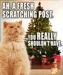 christmas cat meme